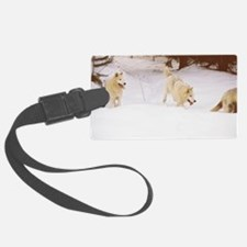"""""""Three  Important  Wolves  Of  T Luggage Tag"""