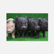 4 micro pigs in a row Rectangle Magnet