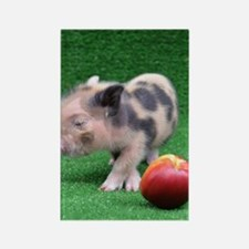 Baby micro pig with Peach Rectangle Magnet