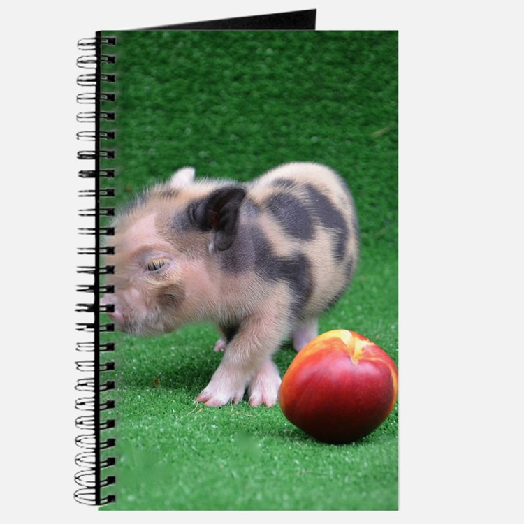 Baby micro pig with Peach Journal