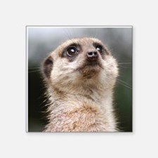 "Meerkat Dry Board Square Sticker 3"" x 3"""