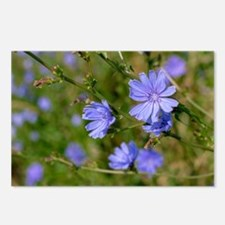 Blue Cornflowers Postcards (Package of 8)