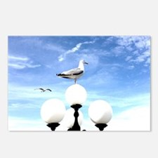 Seagull 1 Postcards (Package of 8)