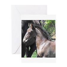 Friesian Sporthorse Foal Greeting Card
