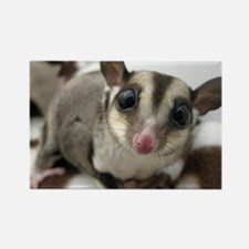Sugar Glider Love Rectangle Magnet