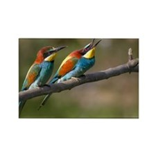 Pair European Bee-eaters Rectangle Magnet