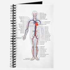 Circulatory System Journal