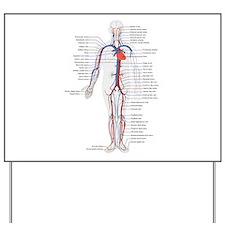 Circulatory System Yard Sign