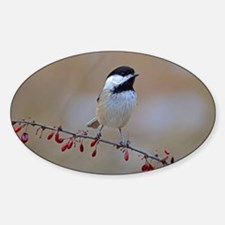 Chickadee on limb 2 Sticker (Oval)