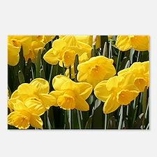 Daffodil flowers in bloom Postcards (Package of 8)