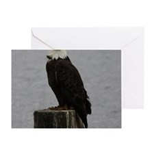 Eagles of the Comox Valley Greeting Card