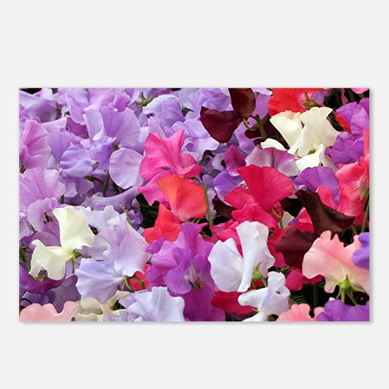 Sweet peas flowers in blo Postcards (Package of 8)