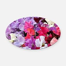 Sweet peas flowers in bloom Oval Car Magnet