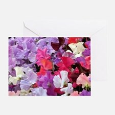 Sweet peas flowers in bloom Greeting Card