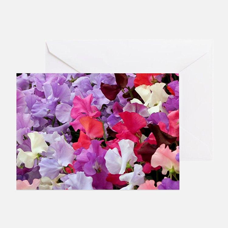 Sweet peas flowers in bloom Greeting Card