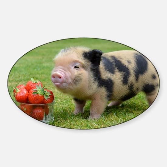 Never Buy a Teacup Pig  Modern Farmer