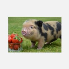 Micro pig with strawberries Rectangle Magnet
