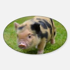 Little Spotty micro pig Decal