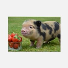 Little micro pig with strawberrie Rectangle Magnet