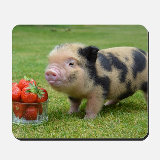 20 Micro Pig And Strawberry Pictures and Ideas on Carver