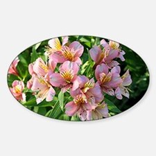 Peruvian lily flowers in bloom Decal