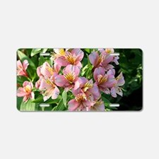 Peruvian lily flowers in bl Aluminum License Plate