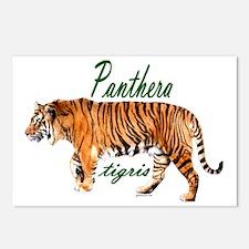 Walking tiger Postcards (Package of 8)