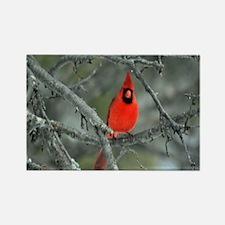 Red Cardinal Rectangle Magnet