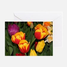 Tulip flowers in bloom 6 Greeting Card