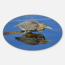 Green Heron Reflection Sticker (Oval)