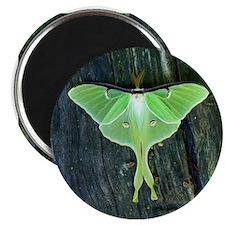 Luna Moth Magnet