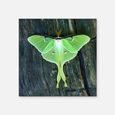 "Luna Moth Square Sticker 3"" x 3"""