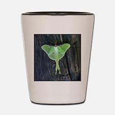 Luna Moth Shot Glass