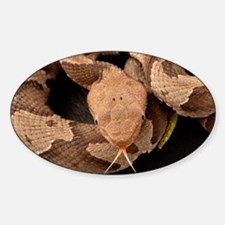 Copperhead Snake Decal