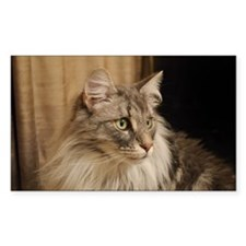 Norwegian Forest Cat Decal