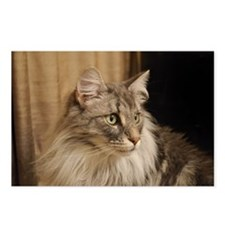 Norwegian Forest Cat Postcards (Package of 8)