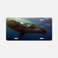 Humpback Whale Diving Aluminum License Plate
