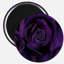 Black Purple Rose Magnet
