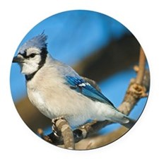 Bluejay 2 Round Car Magnet