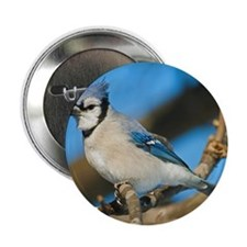 """Bluejay 2 2.25"""" Button"""
