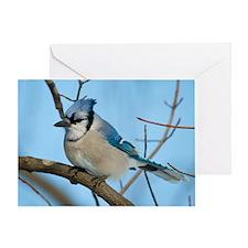 Bluejay 3 Greeting Card