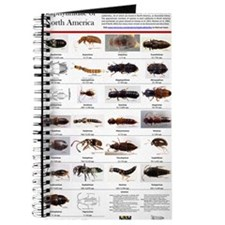 Staphylinidae Poster Journal