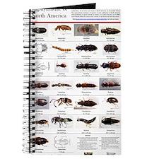 Staphylinidae Poster Journal