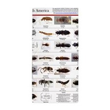 Staphylinidae Poster Beach Towel