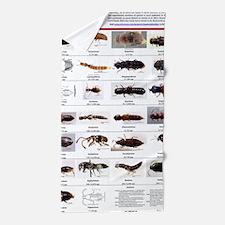 Staphylinidae Poster Beach Towel