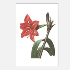 Redoute Amaryllis Postcards (Package of 8)