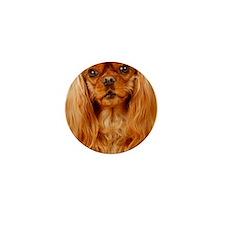 Cavalier King Charles Spaniel - Ruby R Mini Button