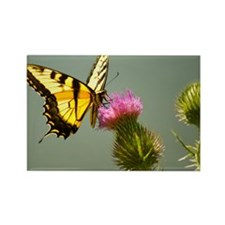 Butterfly Rectangle Magnet