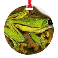 Gliding Treefrog Ornament