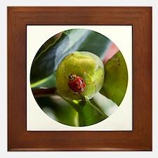 Ladybug on a Camelia Bud Framed Tile